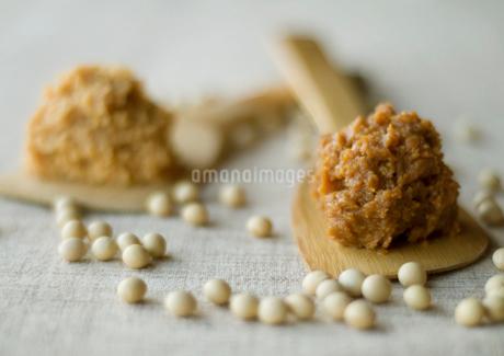大豆と木べらの上の味噌の写真素材 [FYI02846885]