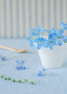 ストライプの壁バックの白い食器と青い花の写真素材 [FYI02847090]
