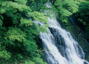 瀬見渓谷、滝と木々の写真素材 [FYI02847188]