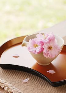 和食器に飾ったピンクの八重桜と花びらの写真素材 [FYI02847550]