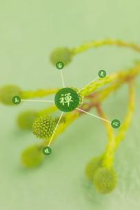 緑の花と和のイメージの写真素材 [FYI02847840]