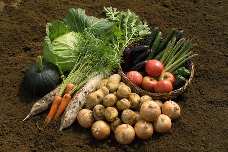収穫野菜の集合の写真素材 [FYI02848040]