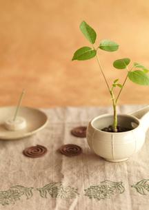 白い器に植えたグリーンの観葉植物とお香の写真素材 [FYI02848083]