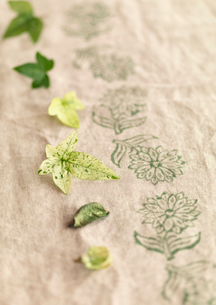 麻布の上に並べたグリーンの葉の写真素材 [FYI02848180]