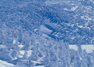 八甲田の雪景色の写真素材 [FYI02848215]