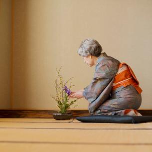 生け花をするシニア女性の写真素材 [FYI02848813]