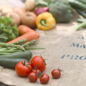 採れたての野菜の集合の写真素材 [FYI02848939]