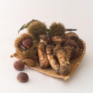 松茸と栗の写真素材 [FYI02848960]