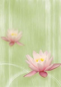 蓮の花のオリエンタルイメージのイラスト素材 [FYI02848986]
