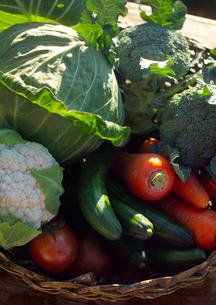 野菜の写真素材 [FYI02849138]