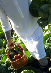 収穫した有機野菜と女性の写真素材 [FYI02849296]