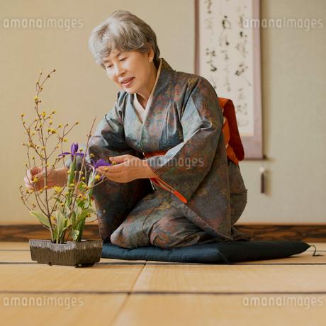 生け花をするシニア女性の写真素材 [FYI02849311]