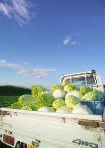 トラックの荷台に積まれた白菜の写真素材 [FYI02849575]