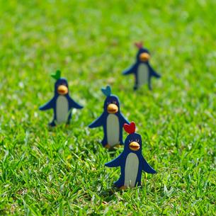 草原でたたずむペンギンのコーラス クラフトの写真素材 [FYI02850158]