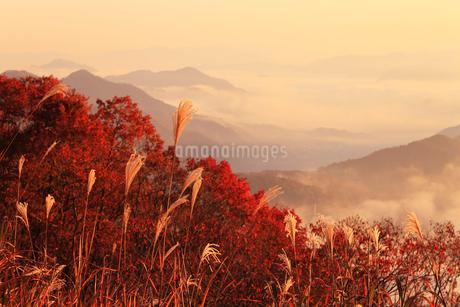 宮垣の紅葉と朝焼けの写真素材 [FYI02850757]