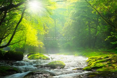 菊池渓谷 広河原の光芒の写真素材 [FYI02850801]