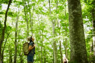 森の木々を見上げる女性の写真素材 [FYI02850871]