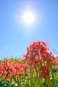ヒガンバナと太陽の写真素材 [FYI02850897]