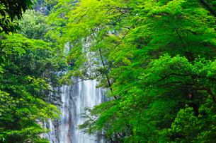 矢研の滝の写真素材 [FYI02850977]