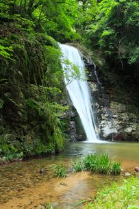 虹の滝(雄滝)の写真素材 [FYI02851023]