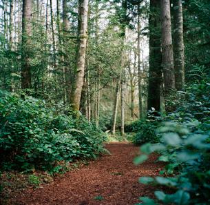 Path through forestの写真素材 [FYI02851090]