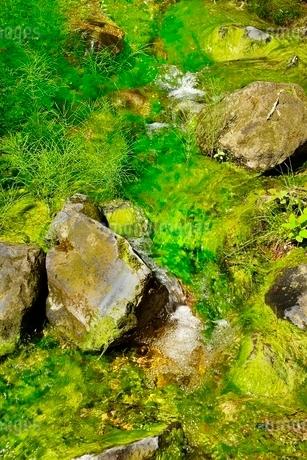 新緑の裏磐梯 五色沼(るり沼)の流れの写真素材 [FYI02851151]