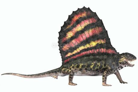 Dimetrodon reptile from the Permian period.のイラスト素材 [FYI02851774]