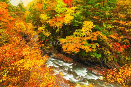 丹波渓谷の紅葉の写真素材 [FYI02852545]