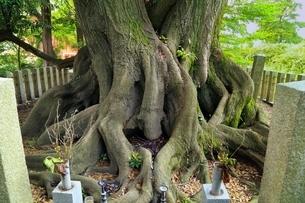 関ヶ原古戦場 東首塚の写真素材 [FYI02852643]