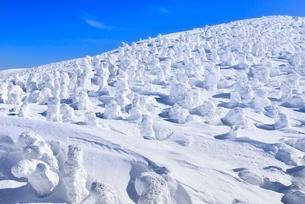 蔵王 地蔵山の樹氷の写真素材 [FYI02852719]