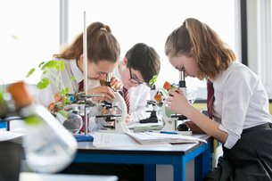 High school students conducting scientific experiment at microscopes in biology classの写真素材 [FYI02852842]