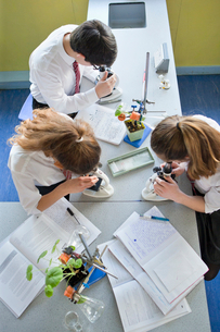 High school students at microscopes conducting scientific experiment in biology classの写真素材 [FYI02852983]