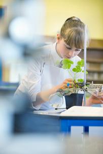 High school student conducting scientific experiment in biology classの写真素材 [FYI02852991]
