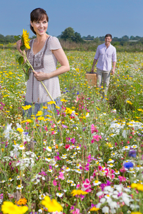 Smiling couple with picnic basket in sunny meadow with wildflowersの写真素材 [FYI02853019]