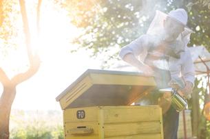 Beekeeper in protective suit using smoker on beehiveの写真素材 [FYI02853407]