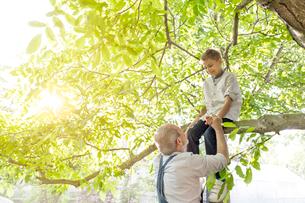 Grandfather helping grandson on tree branchの写真素材 [FYI02853462]