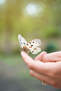 Sweden, Oland, Close up of butterfly sitting on fingerの写真素材 [FYI02854004]