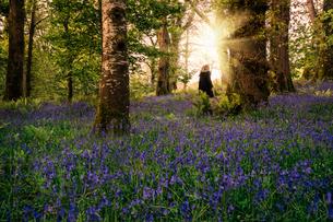 Woman walking in idyllic spring woods with purple wildflowers, Kerry, Irelandの写真素材 [FYI02854617]