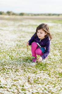 Portugal, Alentejo, Castro Verde, Girl (4-5) picking wildflowersの写真素材 [FYI02854933]