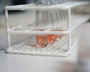 Sweden, Stockholm, Solna, Statens Bakteriologiska Laboratorium, Liquid in test tubesの写真素材 [FYI02855116]