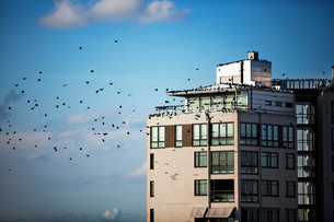 Sweden, Ostergotland, Linkoping, Birds on roof of apartment buildingの写真素材 [FYI02855480]