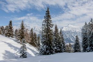 Switzerland, Lenzerheide, Spruce trees on snowy hillの写真素材 [FYI02855505]