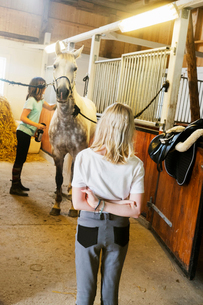 Sweden, Smaland, Vastervik, Hummelstad, Girls (10-11, 12-13) and white horse in stableの写真素材 [FYI02855523]