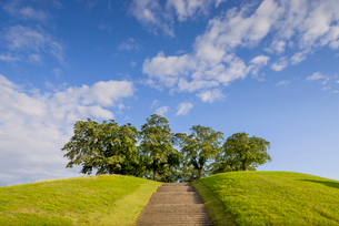 Sweden, Sodermanland, Stockholm, Gamla Enskede, Skogskyrkogarden, Trees on top of hill with steps inの写真素材 [FYI02855581]