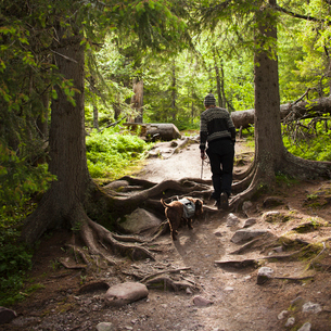 Sweden, Dalama, Fulufjallet National Park, Woman walking dog in forestの写真素材 [FYI02855633]