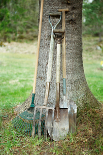 Sweden, Uppland, Gardening tools leaning against treeの写真素材 [FYI02855648]