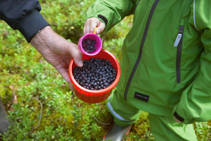 Finland, Pohjois-Savo, Tuusniemi, Grandmother with grandson (2-3) searching for blueberriesの写真素材 [FYI02855688]