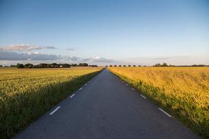 Sweden, Skane, Soderslatt, Beddingeen, Country road passing through meadowの写真素材 [FYI02855806]