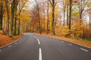 Sweden, Skane, Soderasens National Park, Rostanga, Road in forestの写真素材 [FYI02855895]