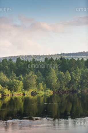 Forest by a river in Vasterbotten, Swedenの写真素材 [FYI02855995]